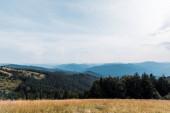 Fotografie žlutý ječmen na louce u hor proti obloze