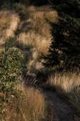 stropní pohled na chodník ve zlatém poli u stromů