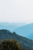 modrá silueta hor nedaleko jedlí na kopci