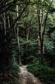 Fotografia sole sul sentiero vicino agli alberi in boschi verdi