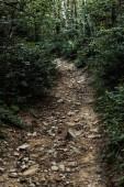 Fotografia pietre sul sentiero vicino agli alberi in boschi verdi