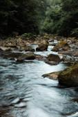 Fotografia rocce umide vicino flusso ruscello e alberi verdi nei boschi