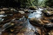 Photo selective focus of flowing stream near wet rocks with green mold