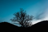 Fényképek fa gallyak a dombon a kék ég ellen