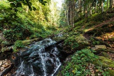 flowing river near wet stones in woods