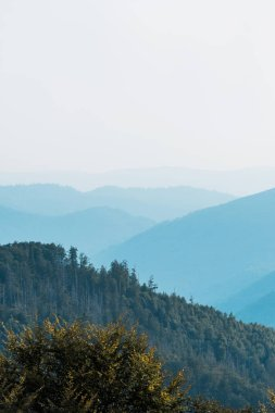 blue silhouette of mountains near fir trees on hill
