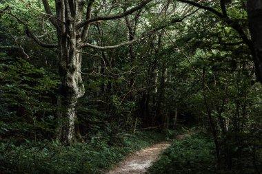 Sunshine on path near green trees in dark woods stock vector