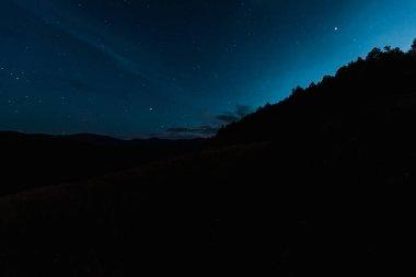 Sky with shining stars near trees at night stock vector