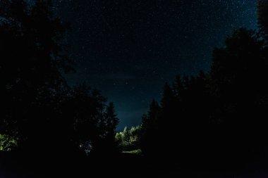 Blue night sky with shining stars near trees stock vector
