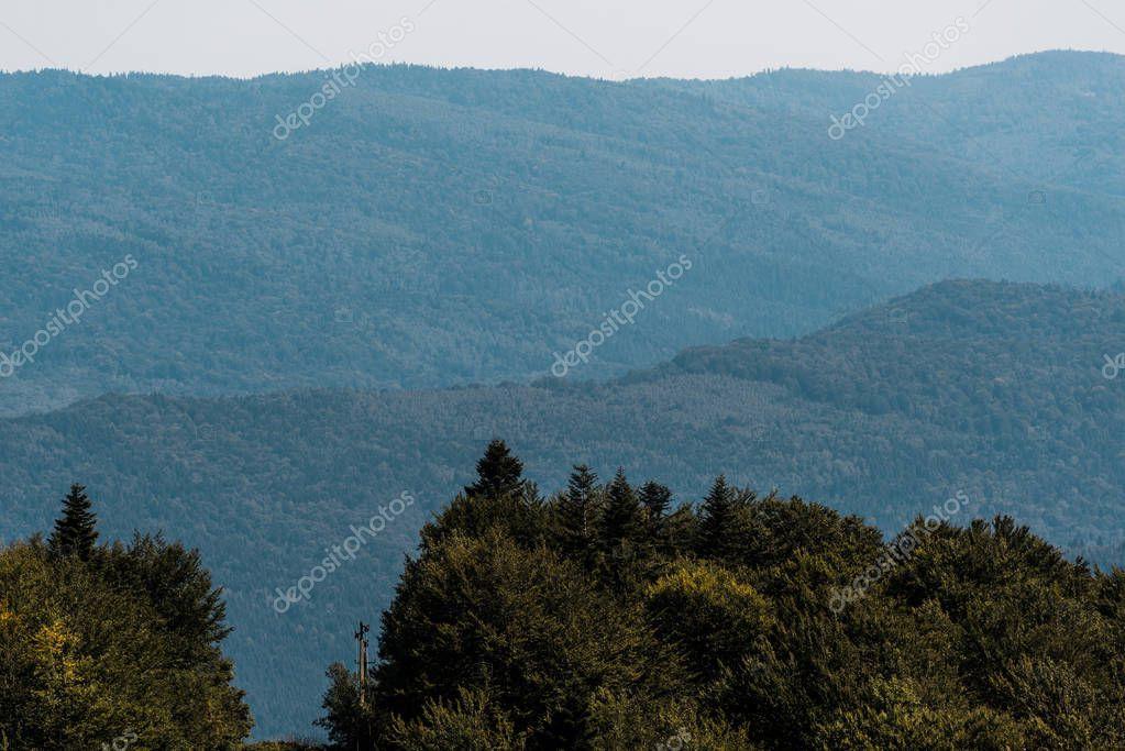Фотообои спокойной горах вблизи зеленые деревья против неба.