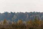 Grüne Bäume im Wald gegen grauen Himmel