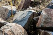 selektivní zaměření skal v blízkosti rostlin na zemi