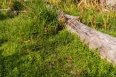 sluneční světlo na dřevěné klády poblíž zelené trávy