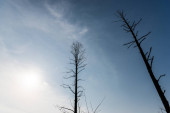 low angle view of branches on trees against blue sky and sun