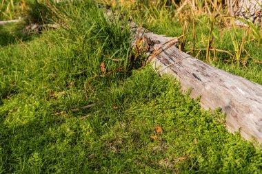 Sunlight on wooden log near green grass stock vector