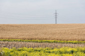 golden field near blooming flowers and power line against blue sky