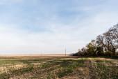 travnatý trávník, pole a stromy v blízkosti elektrického vedení proti modré obloze