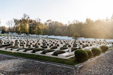 LVIV, UKRAINE - OCTOBER 23, 2019: sunlight on graveyard with crosses and lettering near green trees on lviv defenders cemetery stock vector