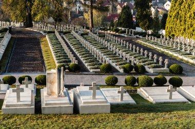 LVIV, UKRAINE - OCTOBER 23, 2019: polish tombs with crosses near green plants in lychakiv cemetery in lviv, ukraine stock vector
