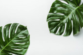 top view of green palm leaves on white background