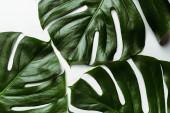 Draufsicht auf grüne Palmblätter auf weißem Hintergrund