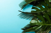 top view of green palm leaves on blue background