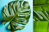 Collage aus grünen Palmblättern auf blauem Hintergrund