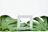 square empty frame on green palm leaves on white background