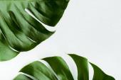 zblízka pohled na zelené palmové listy na bílém pozadí