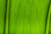close up view of green palm leaf background