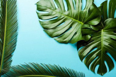 Top view of green palm leaves on blue background stock vector