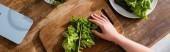 panoráma lövés nő vágás friss saláta vágódeszka