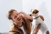 vzrušený podnikatel v bezdrátových sluchátek dotek jack Russell teriér pes v kanceláři
