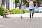 částečný pohled na člověka s jack Russell teriér pes na vodítku běží podél městské lávky