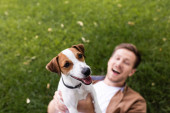 selective focus of excited man holding jack russell terrier dog while lying on green lawn