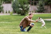 Selektivní zaměření mladého muže hraje s jack Russell teriér na travnatém trávníku