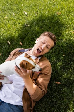 top view of excited man lying on green lawn with jack russell terrier dog