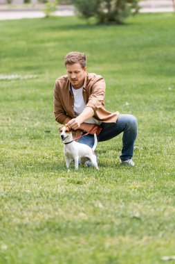 young man in casual clothes training jack russell terrier dog on lawn in park