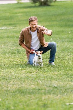 Young man in brown shirt and jeans playing with jack russell terrier dog on green grass in park stock vector