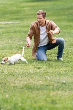 Young man in casual clothes having fun with jack russell terrier dog on green lawn in park stock vector