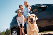Selective focus of golden retriever looking at camera near family and auto outdoors