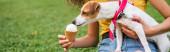 Ausgeschnittene Ansicht einer jungen Frau, die Jack Russell Terrier Dog Ice füttert