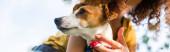 oříznutý pohled na ženu držící psa Jack Russell teriér, panoramatický koncept