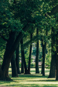Selective focus of trees on meadow with green grass in summer park
