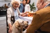 joyful senior woman stroking golden retriever during thanksgiving dinner with multicultural family