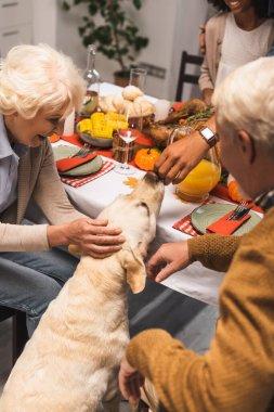 Selective focus of multiethnic family stroking golden retriever during thanksgiving dinner stock vector