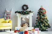 Labrador ležící v blízkosti dárky a vánoční stromeček ve zdobeném obývacím pokoji