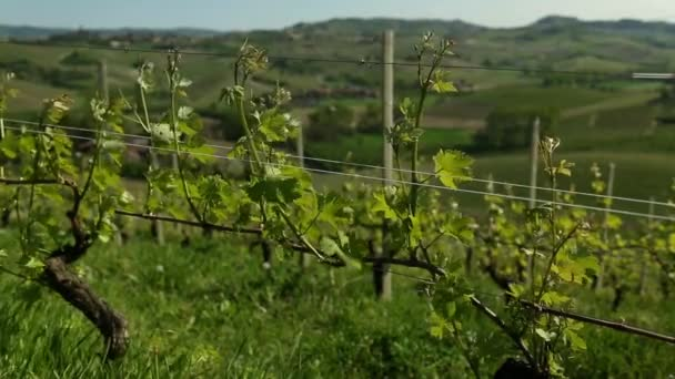 Video of Wine Country