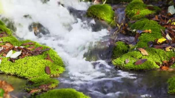 lesní potok s mechem zahrnuty kameny