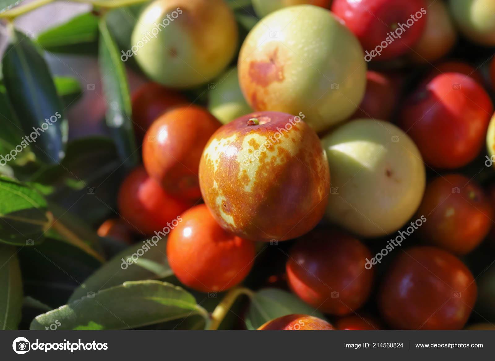 Jujube Dried Fruits Autumn Season Also Used Alcohol Digestive Eat